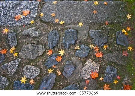 Autumn momidzi - stock photo