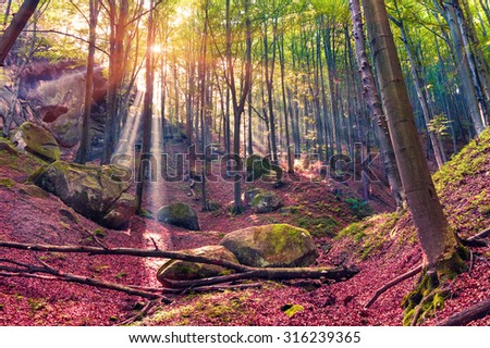 Autumn morning in mystical woods. Instagram toning. - stock photo