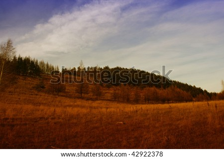 Autumn morning in the deep forest. - stock photo