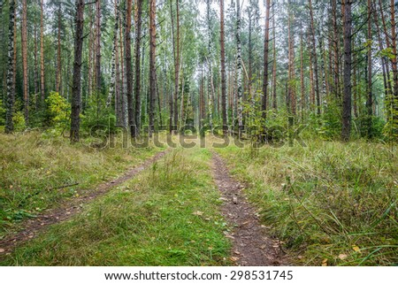 Autumn 2014. Morning. Russia. The suburbs of Moscow. The autumn forest at misty morning. The road in Forest.