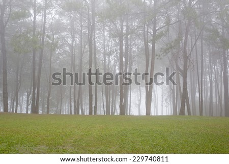Autumn morning with fog in the forest - stock photo