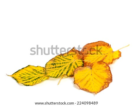 Autumn multicolored leafs at corner. Isolated on white background. - stock photo