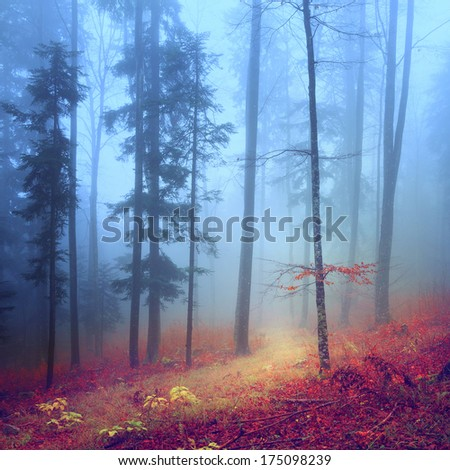 Autumn mysterious forest with pathway. - stock photo