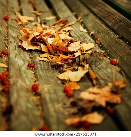 Autumn nature background. Instagram vintage retro effect. - stock photo