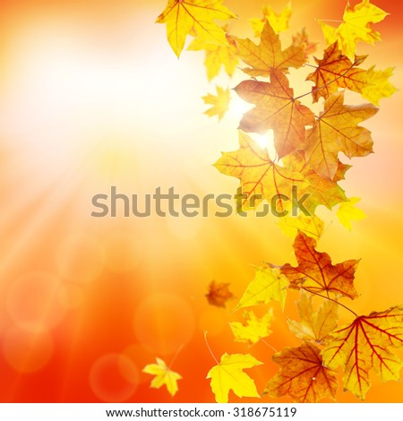 Autumn nature background with falling maple leaves - stock photo
