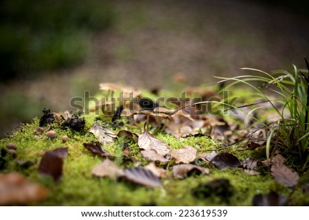 autumn nature background with green moos, leaves, grass, and mushrooms in the back  - stock photo