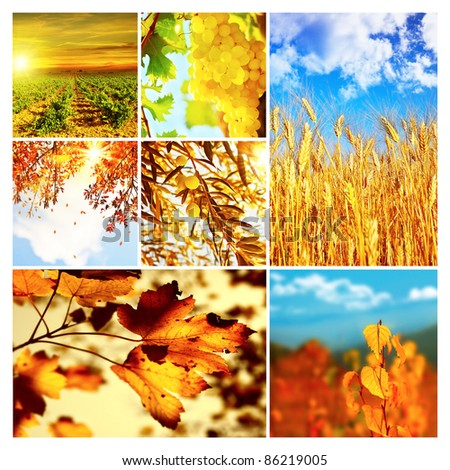 Autumn nature collage, collection of beautiful images of growing fruits, wheat and falling old dry tree leaves, seasonal time of the year, agriculture at harvest - stock photo