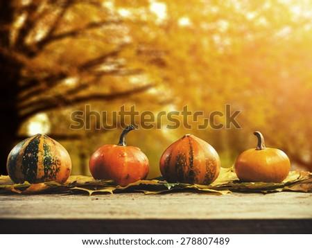 Autumn nature concept. Pumpkins on wood. Thanksgiving.  - stock photo