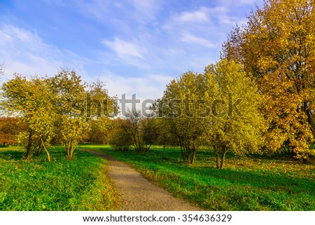 Autumn Nature in Public Park with Pathway and Multicolored Trees on Green Grass
