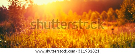 Autumn Nature Meadow Yellow Dry Grass Natural Blurred Absract Background With Bright Sunlight. Bokeh, Boke  With Sunlight Yellow And Orange Colors Toned Instant Filtered Image - stock photo