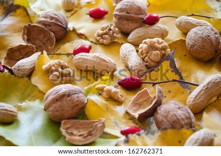 Autumn nuts - stock photo
