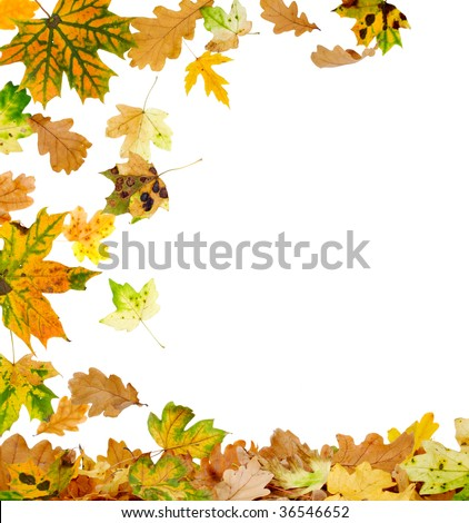 Autumn oak and maple leaves falling to the ground - stock photo