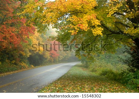 Autumn on this misty morning drive glows with yellow, gold and orange.  Asphalt is wet from mist. - stock photo