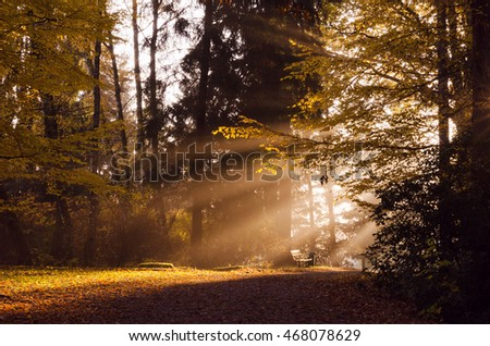 Autumn or fall morning with sun shining through branches of a tree
