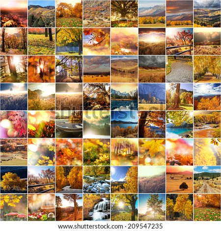 autumn orange collage - stock photo