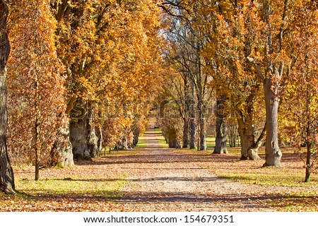 Autumn Park Alley - stock photo