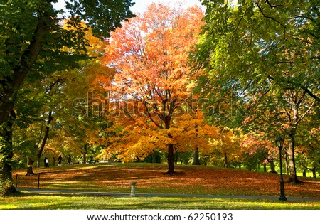 Autumn park. Central park. Manhattan - stock photo