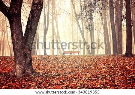 Autumn park in dense fog - lonely bench under the bare trees among the fallen red leaves. Vintage tones processing.  - stock photo