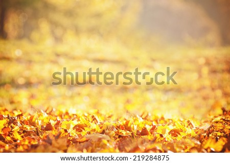 autumn park in sunlight - stock photo