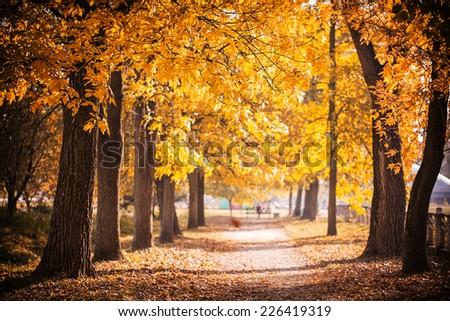 Autumn Park path golden leaves on trees - stock photo