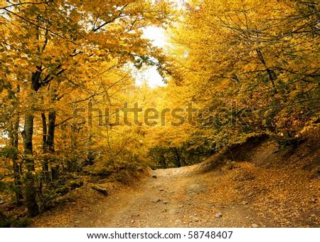 Autumn park road - stock photo