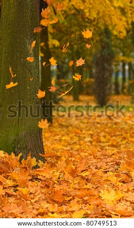 Autumn park road - yellow leafs - stock photo