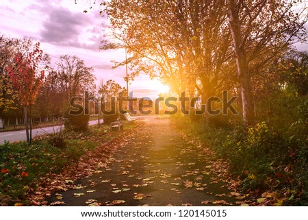 Autumn park's path in evening glow aftter rain - stock photo