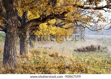 autumn park tree - stock photo