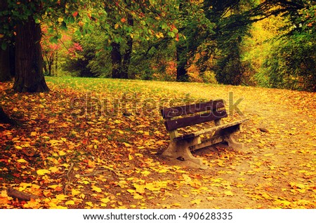 Autumn park with orange trees, dry leaves and single bench, natural seasonal background