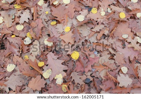 Autumn park with red and yellow leaves