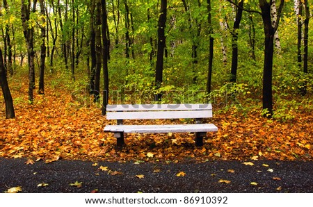 autumn park with single bench and nice background - stock photo