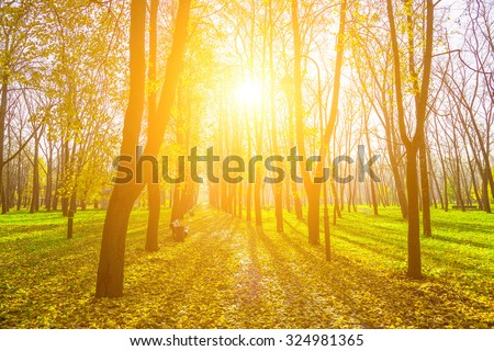 Autumn Park with Trees Along the Avenue with Road in Dry and Yellow Foliage and Bright Sun - stock photo