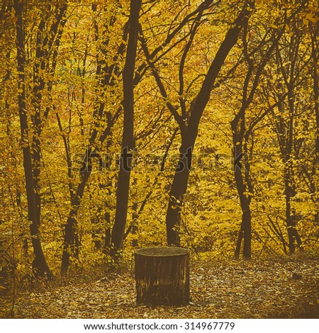 Autumn  park with yellow trees, natural seasonal vintage background - stock photo