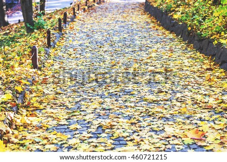 Autumn path. Desert city park alley strewn with fallen leaves - stock photo