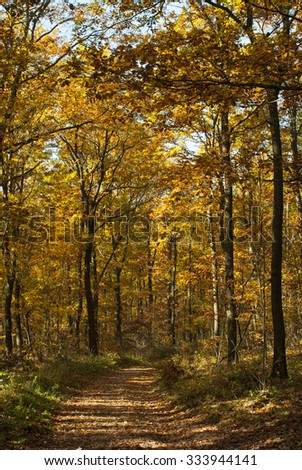 autumn path in a forest - stock photo