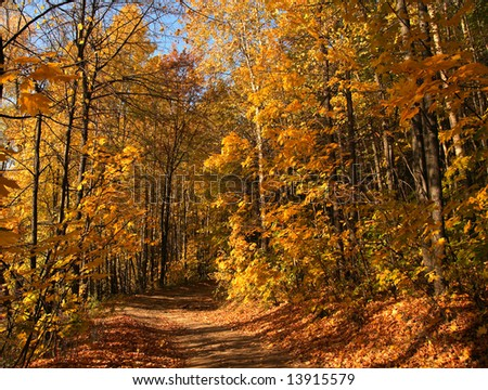 Autumn path in wood.