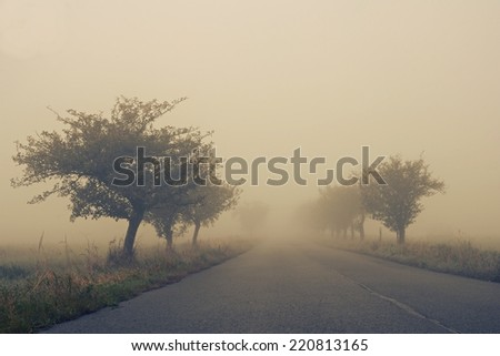 Autumn path through a golden road with fog and warm light - stock photo