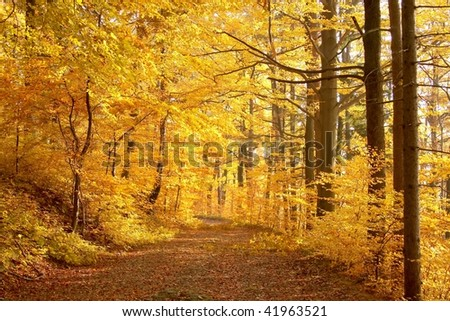 Autumn path through a picturesque forest in the warm colors of the afternoon sun.