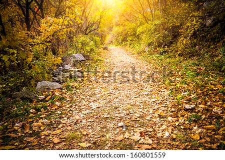Autumn Pathway - stock photo