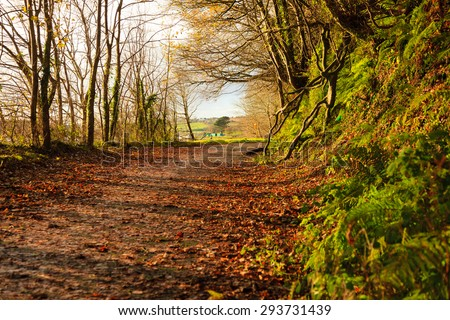 Autumn Pathway. Co.Cork, Ireland. Park Road. Landscape with the autumnal forest. Beautiful orange fall leaves. - stock photo