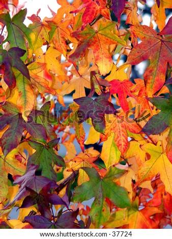 Autumn pattern - stock photo