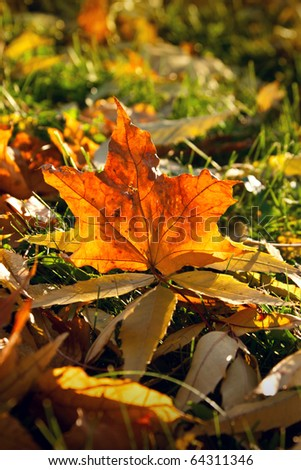 Autumn photography - stock photo