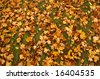 autumn picture of many coloured leaves on the grass - stock photo