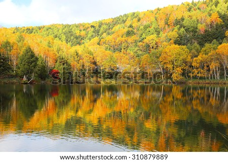 Autumn pond Scenery. Protected wetlands bathed in golden light and beautiful autumn foliage reflected on water of Lake Kido in Shiga Kogen, beautiufl as Tsuta marsh, Towada Hachimantai, Aomori, Japan