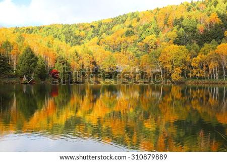 Autumn pond Scenery. Protected wetlands bathed in golden light and beautiful autumn foliage reflected on water of Lake Kido in Shiga Kogen, beautiufl as Tsuta marsh, Towada Hachimantai, Aomori, Japan - stock photo