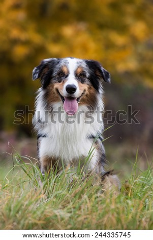 autumn portrait of happy dog outside sitting on the grass