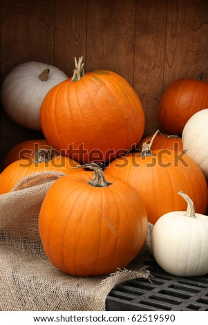 Autumn pumpkin display. Shallow depth of field, focus on the front pumpkin.