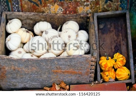 Autumn pumpkin harvest in a boxes - stock photo