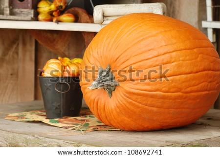 Autumn pumpkin on a table - stock photo