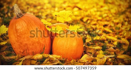 Autumn pumpkins in fallen leaves, Thanksgiving concept in outdoor